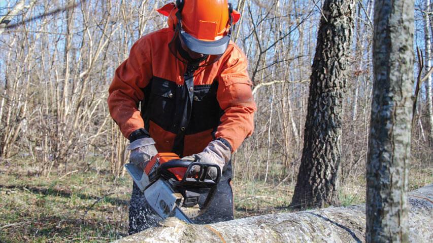 Safe Chainsaw Handling & Maintenance